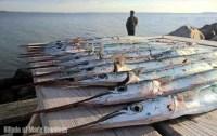 Fiskeudstyr med fiskestænger, blink og andet fiskegrej